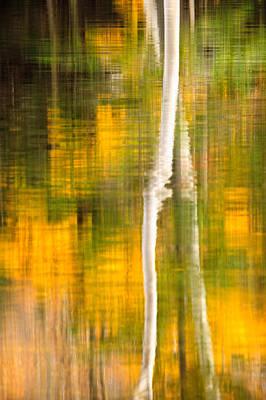 Photograph - Birch Reflections by Jeff Sinon