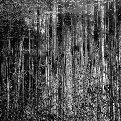 Photograph - Birch Reflections by Lauren Rathvon