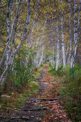 Photograph - Birch Series No. 4 by Darylann Leonard Photography
