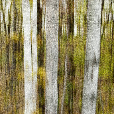 Photograph - Birch Square by Rob Huntley