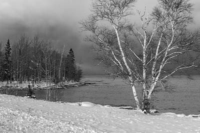 Trees And Lake Photograph - Birch Tree And Lake Superior  by John McGraw