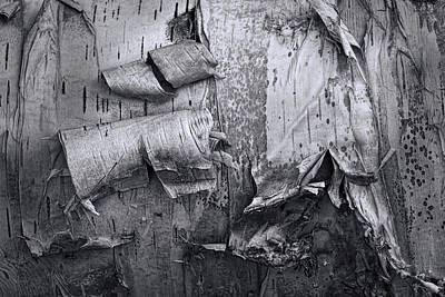Photograph - Birch Tree Bark No 0863 In Black And White by Randall Nyhof