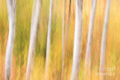 Photograph - Birch Tree Impressions by Sharon Seaward