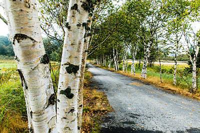 Photograph - Birch Tree Lane by Ben Graham