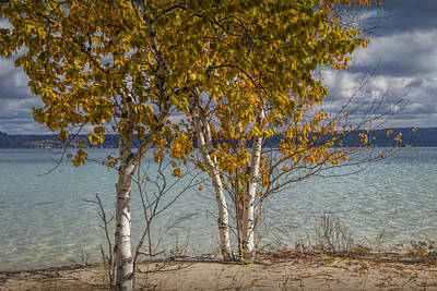 Randall Nyhof Royalty Free Images - Birch Trees along the shore of Crystal Lake Royalty-Free Image by Randall Nyhof