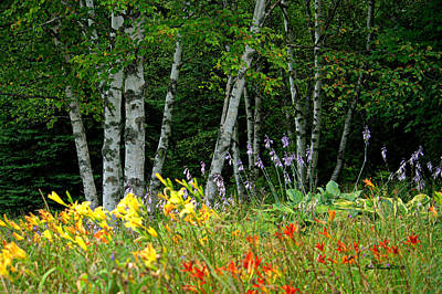 Photograph - Birch Trees And Flowers by Jale Fancey