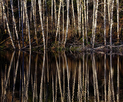 Photograph - Birch Trees And Reflection by Wes and Dotty Weber
