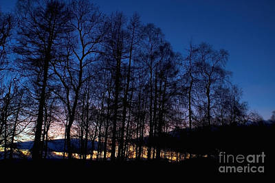 Photograph - Birch Trees At Sunset 1396 by Colin Munro