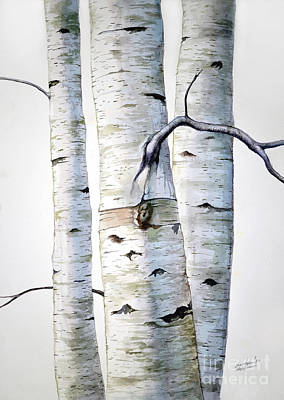 Kitchen Mark Rogan - Birch Trees in watercolor by Christopher Shellhammer
