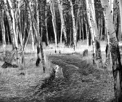 Photograph - Birch Trees by Dave Beckerman