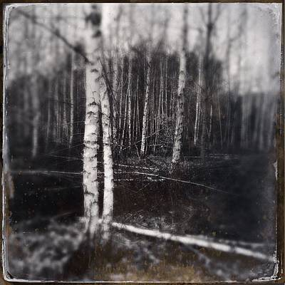 Forest Wall Art - Photograph - Birch Trees In Enchanted Forest by Matthias Hauser