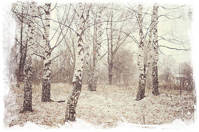 Soul Healing Photograph - Birch Trees In The Snow. Winter Poems by Jenny Rainbow