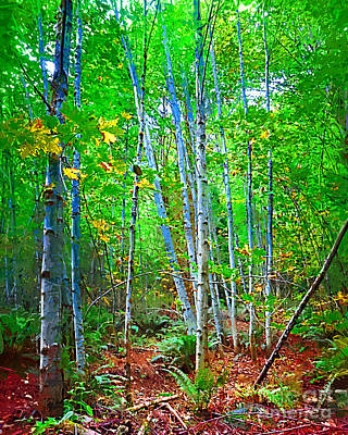 Digital Art - Birch Trees In The Woods by Kirt Tisdale