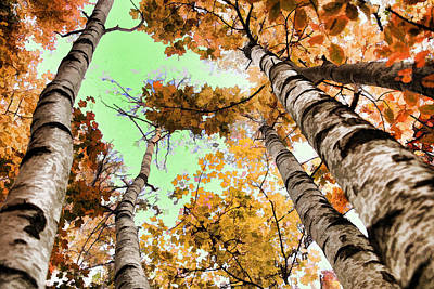 Photograph - Birch Trees by Mike Flake