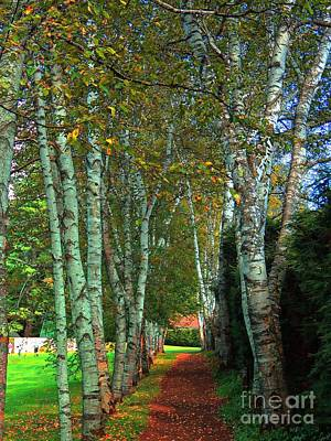 Photograph - Birch Walkway by Marcia Lee Jones
