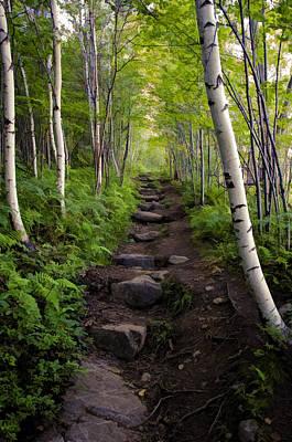 Birch Woods Hike Art Print