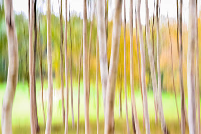 Photograph - Birches And Fairways by Benjamin Callahan