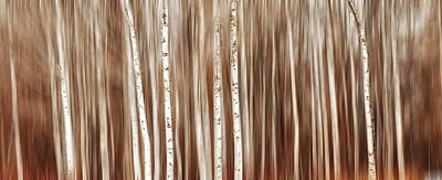 Photograph - Birches In Motion by Mary Jo Allen