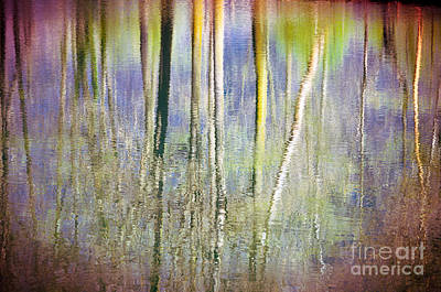 Photograph - Birches Reflections 3 by Silvia Ganora