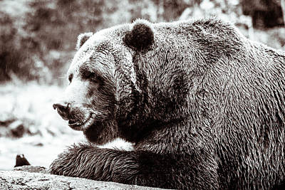 Art Print featuring the photograph Bird And A Bear In Black And White by Wade Brooks