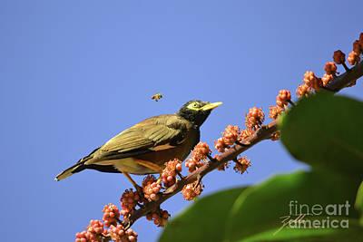 Photograph - Bird And Bee by Suzette Kallen