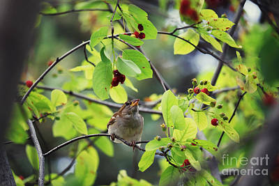 Photograph - Bird And Berry by Charline Xia