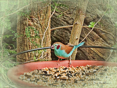 Photograph - Bird And Feeder by Joan  Minchak