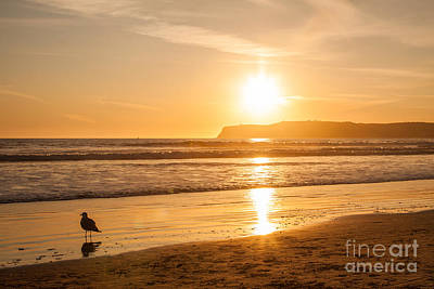 Bird And His Sunset Art Print