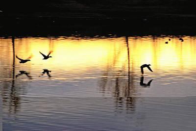 Alberta Photograph - Bird And Sunrise by Laura Strain