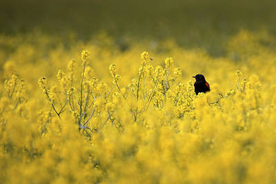 Photograph - Bird And The Bees Mg_9150 by David Orias