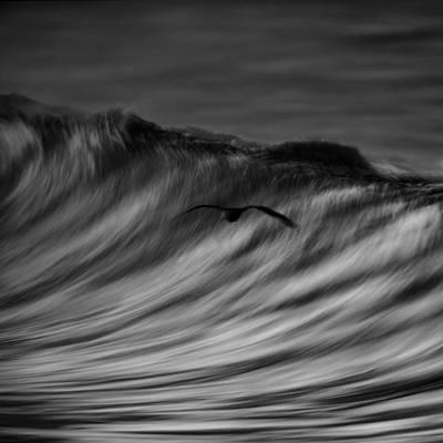 Photograph - Bird And Wave  73a0300 by David Orias