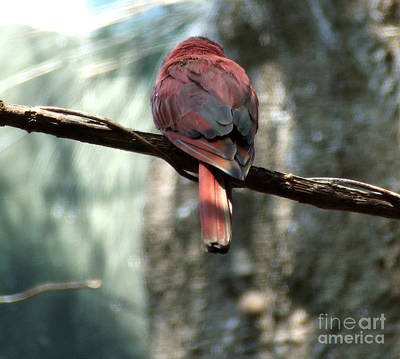 Bird Art Print by Andrea Anderegg