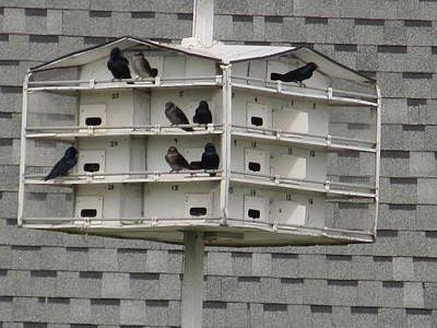 Beastie Boys - Bird Apartment House by Tina M Wenger