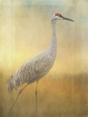 Painting - Bird Art - Walking Away by Jordan Blackstone
