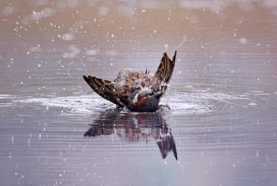 Photograph - Bird Bath by Dreamland Media