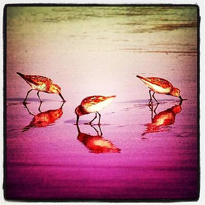 Wildlife Photograph - #bird #birds #beach #summer #sunset by Jill Battaglia