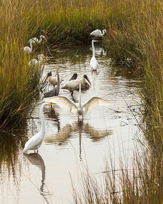 Photograph - Bird Brunch 2 by Patricia Schaefer