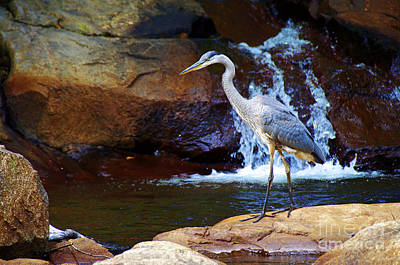 Photograph - Bird By A Waterfall  by Sarah Mullin