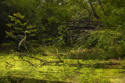Nature Center Pond Digital Art - Bird By Bridge In Forest Merged Image by Thomas Woolworth