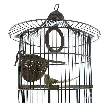 Bird Cage Art Print by Bernard Jaubert