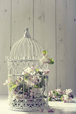 Birdcage Photograph - Bird Cage by Amanda Elwell