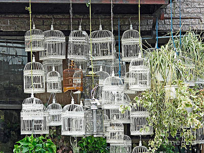 Photograph - Bird Cages  by Ethna Gillespie