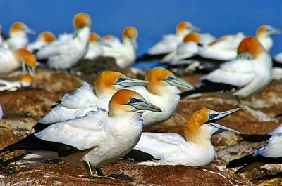 Art Print featuring the photograph Bird Colony Australia2 by Henry Kowalski