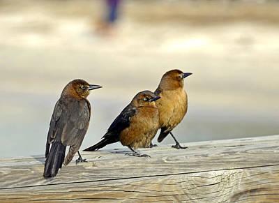 Digital Art - Bird Convention 2 by Lynda Lehmann