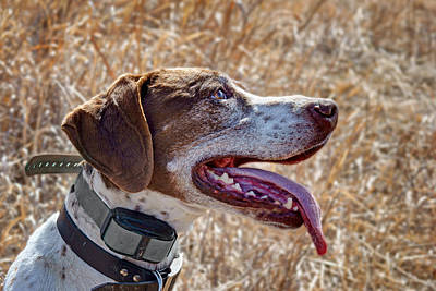 Photograph - Bird Dog - Profile by Nikolyn McDonald