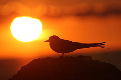 Photograph - Enjoy The Sunset by Dreamland Media