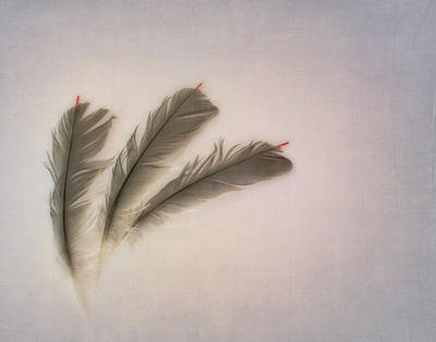 Photograph - Bird Feathers by David and Carol Kelly