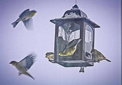 Photograph - Bird Feeding Frenzy by Barbara Dean