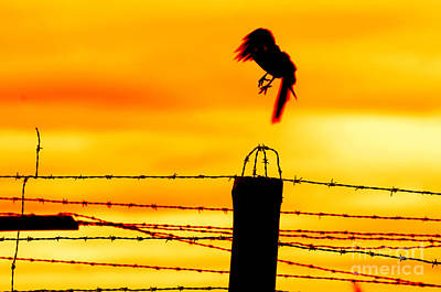 Barbed Photograph - Bird Flying Off From Prison Fence by Michal Bednarek