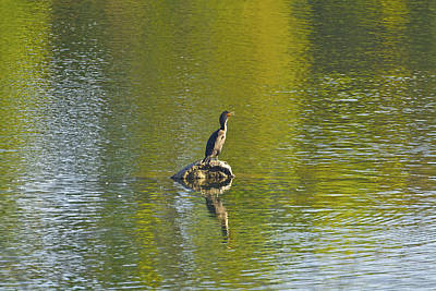 Photograph - Bird Folsom State Rec Area by SC Heffner